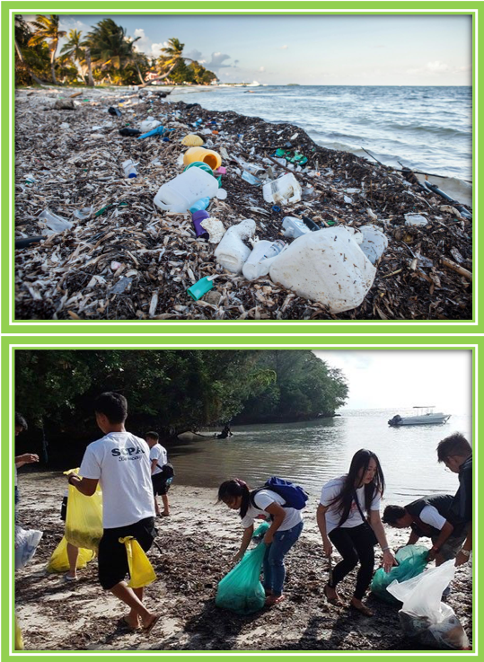 Clean up the beach - Sustainability